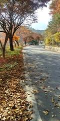 바람 잔잔한 가을 오후 산책길  | 오송폭포