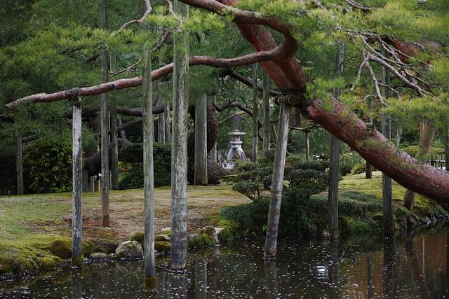 Pine and a stone lantern