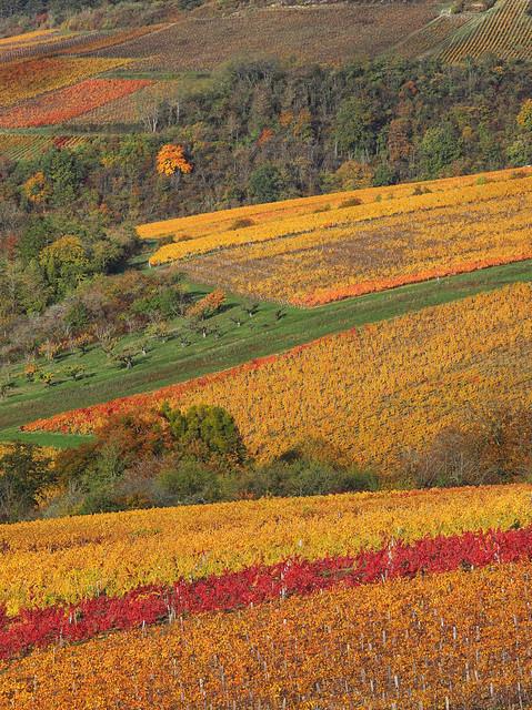 Patchwork viticole et automnal