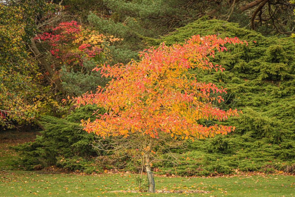 Autumnal colours at Exbury-3057.jpg