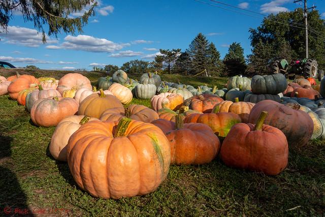 Land Of The Misfit Pumpkins