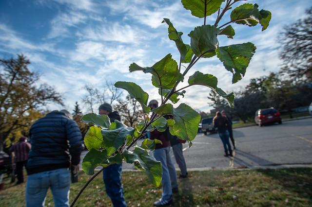 Apple tree planting. Oct. 27, 2020