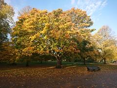 In Kensington Gardens