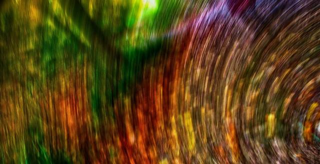 Spinning Woodland