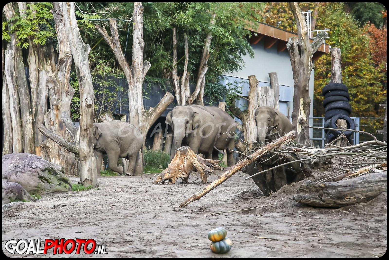Halloween traktatie voor dieren in Dierenpark Amersfoort 27-10-2020