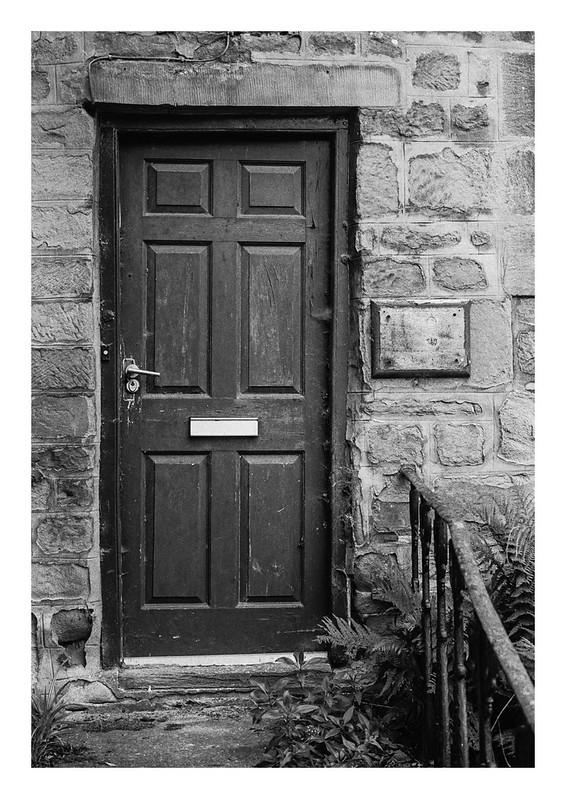 Door and ferns