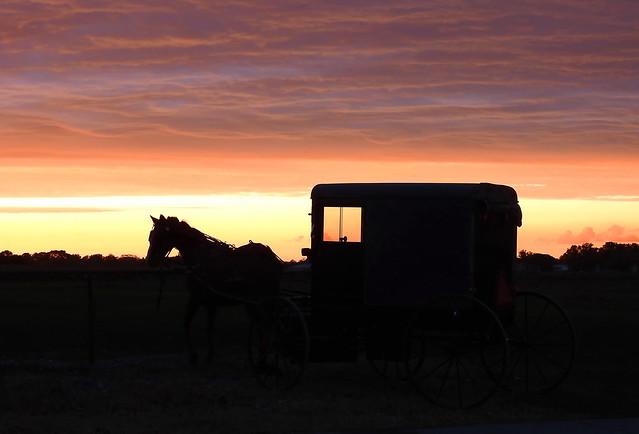 Horse & buggy sunset