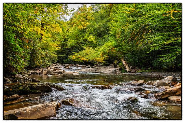 Creek in the Smokey Mountains
