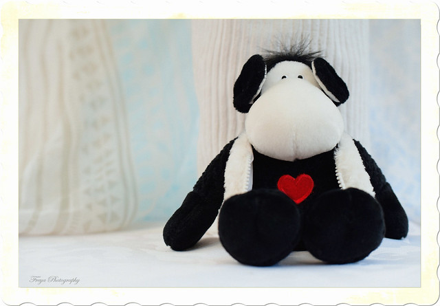 The Black Sheep...