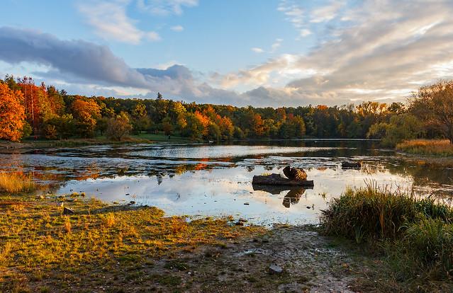 Podzimní večer u Milíčovského rybníka