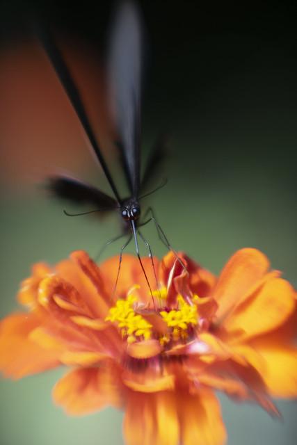 Dreamy Butterfly (2)