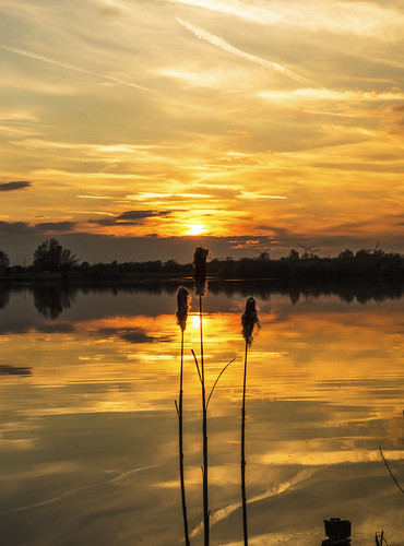 canon6d landscape nbature outdoors outside sunset silhouette reeds water lake reflections goldensky clouds sun uk cambridgeshire