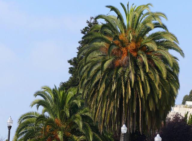 plant / palm tree at sfgh 10-20*