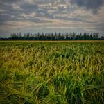 9. Juuni 2020 - 18:31 - Tomorrow's Harvest