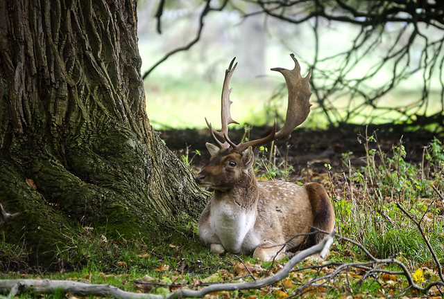 Time for a quick sit-down and hide from the rain.....