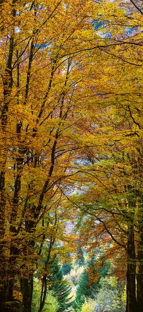 vertical panorama autumn colors