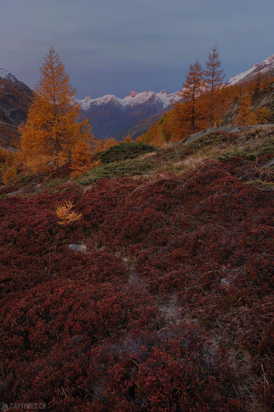 Red carpet - Lötschental