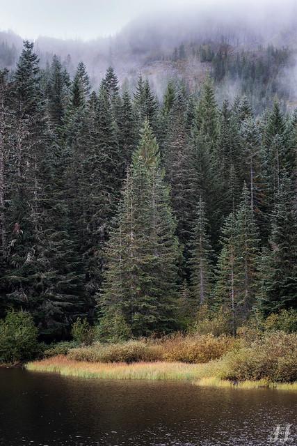 A Tree Among Trees