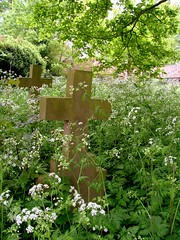 cross and cow parsley