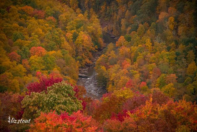 20201002 Autumn_432