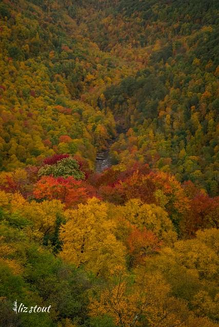 20201002 Autumn_378