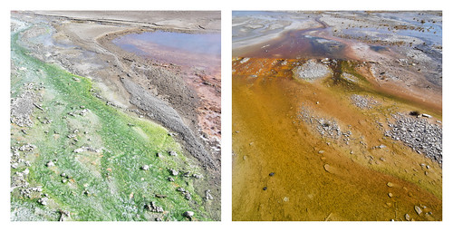 Thermophiles of the Norris Geyser Basin | by pedrik