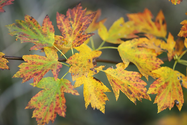 Colours of autumn: The Service