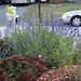 2020-MFDG481-Dig Driveway Garden in fall