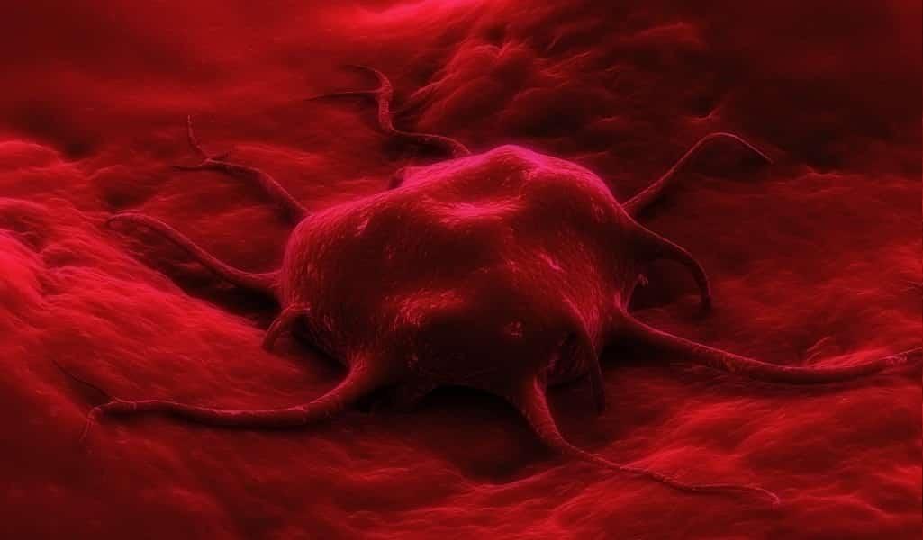 des-nanoparticules-détruisent-le-cancer-de-intérieur