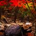 "<p><a href=""https://www.flickr.com/people/jasonteale/"">JTeale</a> posted a photo:</p>  <p><a href=""https://www.flickr.com/photos/jasonteale/50539267403/"" title=""Fall into Korea""><img src=""https://live.staticflickr.com/65535/50539267403_f116c7e7b1_m.jpg"" width=""160"" height=""240"" alt=""Fall into Korea"" /></a></p>"