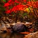 "<p><a href=""https://www.flickr.com/people/jasonteale/"">JTeale</a> posted a photo:</p>  <p><a href=""https://www.flickr.com/photos/jasonteale/50539270153/"" title=""Fall into Korea""><img src=""https://live.staticflickr.com/65535/50539270153_18c1d7c65f_m.jpg"" width=""160"" height=""240"" alt=""Fall into Korea"" /></a></p>"