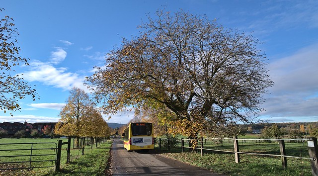 yellow bus and leaves