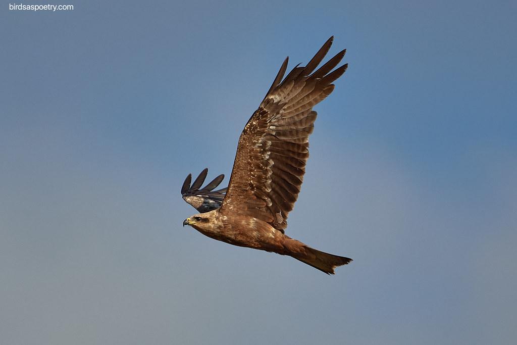 Black Kite: Air Mastery