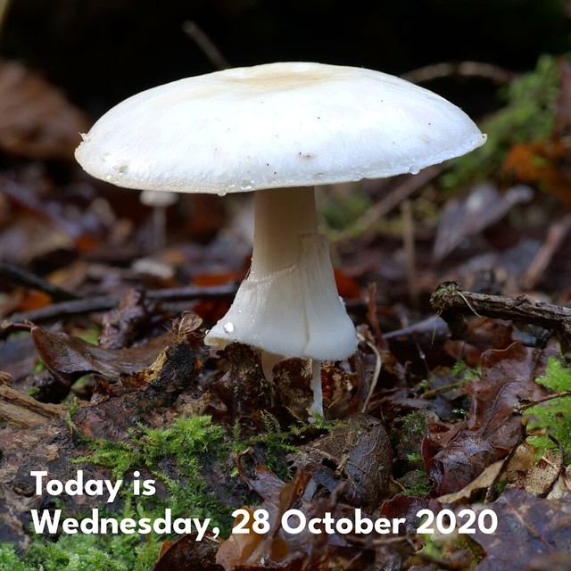 Today is Wednesday, 28 October 2020