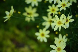 Navy yard flower