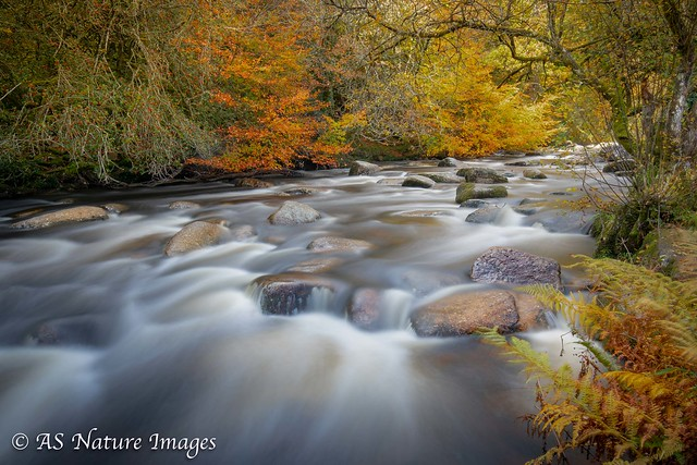 Going with the Flow-  Autumn Colours at Dartmeet on Dartmoor