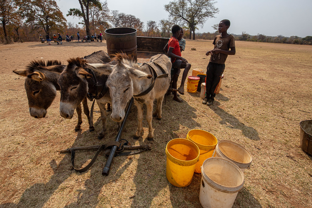 Life-saving assistance in drought-affected Zambia and Zimbabwe