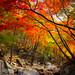 "<p><a href=""https://www.flickr.com/people/jasonteale/"">JTeale</a> posted a photo:</p>  <p><a href=""https://www.flickr.com/photos/jasonteale/50539993776/"" title=""Fall into Korea""><img src=""https://live.staticflickr.com/65535/50539993776_0332c1f00e_m.jpg"" width=""160"" height=""240"" alt=""Fall into Korea"" /></a></p>"