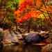 "<p><a href=""https://www.flickr.com/people/jasonteale/"">JTeale</a> posted a photo:</p>  <p><a href=""https://www.flickr.com/photos/jasonteale/50539995791/"" title=""Fall into Korea""><img src=""https://live.staticflickr.com/65535/50539995791_bcb111c3c6_m.jpg"" width=""240"" height=""160"" alt=""Fall into Korea"" /></a></p>"