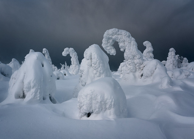 Kuntivaara Frozen Forrest
