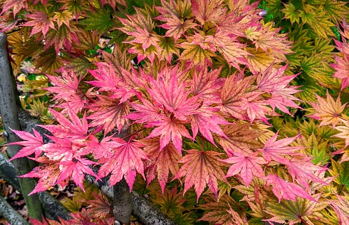 Red leaves in the park | by Tony Worrall