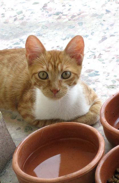 Ο κύριος Πιό με τα κιούπια του.   Mr Pio' with his bowls.