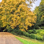 Golden trees at Miller Park, Preston