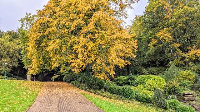 Golden trees at Miller Park, Preston