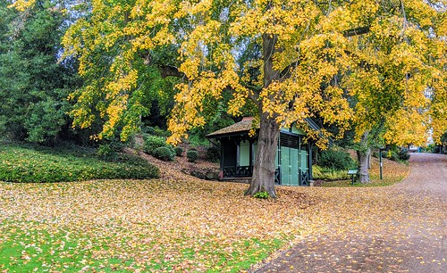 Golden Avenham park, Preston | by Tony Worrall