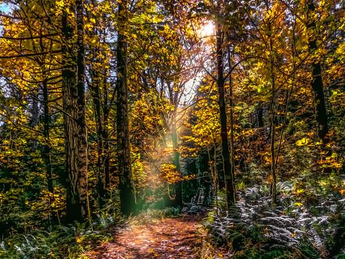 autumn colors autumncolors sunshine sunny sun paths colorful warm fall scenic landscape sunrays