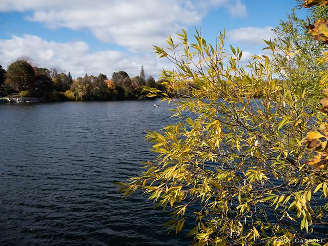 Otonabee River, autumn