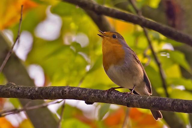 Chant d'automne... Song of autumn... #E-M10MarkII #ART  #Gimp #DigiKam