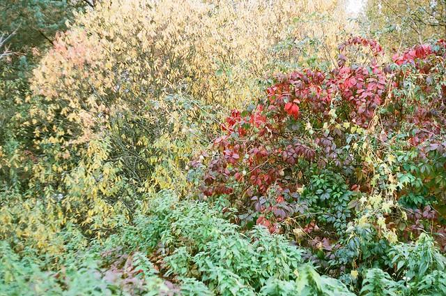Three colors of autumn