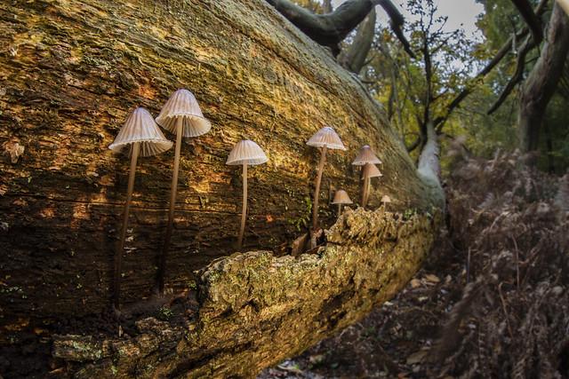 Fungi Wide Angle